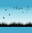 field of grass and silhouettes of flying birds vector image vector image