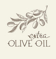 sprig of olive decorative sketch vector image vector image