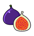 Fig isolated on a white background vector image