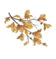 autumn oak leaves branch vector image vector image
