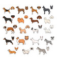 dog breeds side view and muzzle set collection vector image