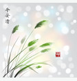 leaves of grass hand drawn with ink on white vector image vector image