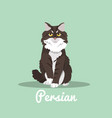 persian cute cat is sitting design vector image vector image