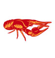 color with crayfish on white vector image vector image