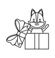 fox in gift box vector image vector image