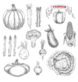 Ripe farm vegetables sketches set vector image vector image