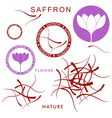 Saffron vector image