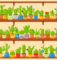 seamless pattern with cactuses and succulents in vector image vector image