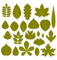 set of green leaves from different trees vector image vector image