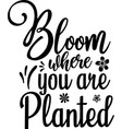bloom where you are planted vector image