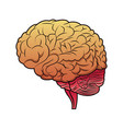 brain mind idea creativity image vector image