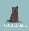 british shorthair with red eyes sitting on sky vector image