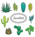 Succulents plant set Botanical green vector image vector image