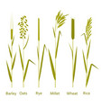 cereals plants set carbohydrates sources vector image