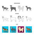 dog breeds flatoutlinemonochrome icons in set vector image vector image