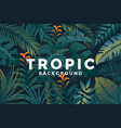 tropical background 4 vector image vector image