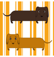 two dachshunds vector image
