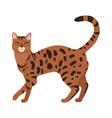 bengal cat flat design vector image vector image
