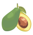 two halves of avocado vector image