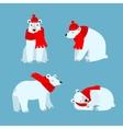 Cartoon Cute Polar Bear Animal vector image