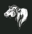 head bull dangus breed drawn in vintage vector image vector image