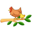 hen and chick on white background vector image vector image