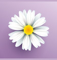 realistic paper daisy flower vector image vector image