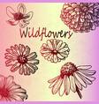 red gradient sketch wildflowers set vector image vector image