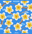 tropical flowers plumeria pattern vector image