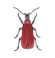 bug red hand drawn insect detailed vector image