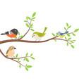 cute birds with tree branch vector image vector image