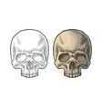 skull human black vintage vector image vector image