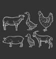 farm animal set vector image vector image