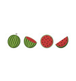 fresh watermelon fruits in different condition vector image