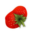 strawberry fruit with green leaves top view vector image vector image