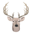 deer head beautiful buck with antlers vector image