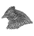 hen head vector image vector image