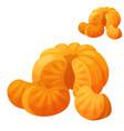 mandarin detailed icon isolated on white vector image