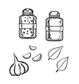 Salt pepper garlic and basil sketch vector image