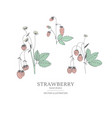 hand drawn strawberry set vector image