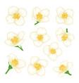 set flowers jasmine cartoon watercolour style vector image