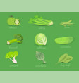 set of green vegetables collection vector image vector image