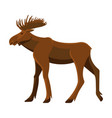 wild adult moose with big branchy horns and strong vector image vector image