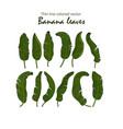 icons tropical banana leaves vector image