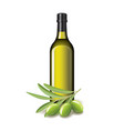 Olive oil bottle and olives isolated vector image
