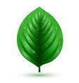 realistic green leaf isolated on a white vector image