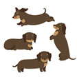 set dachshund dogs isolated on white background vector image vector image