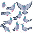 set of gray doves in motion vector image vector image
