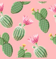 cactus with pink flowers on light background vector image