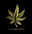 cannabis gold premium logo company business vector image